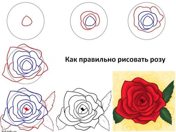 Картинки нарисованные карандашом роза поэтапно